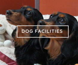 Dog Facilities